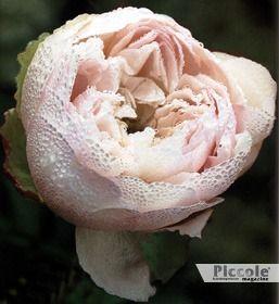 BILANCIA: Simbolismo, Psicologia, Dialettica, Destino: rose d'autunno